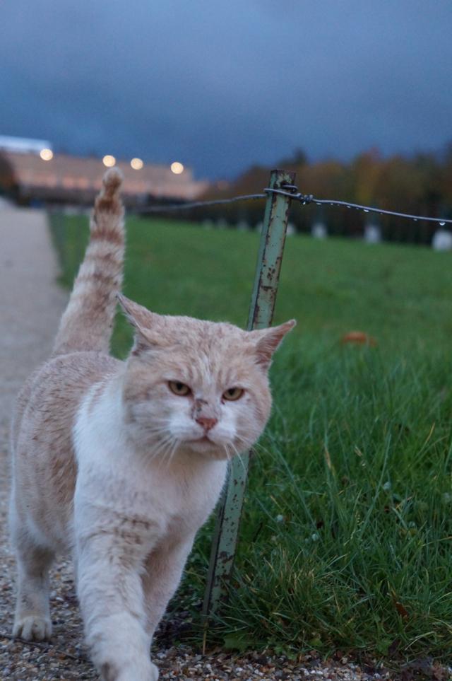 Versailles Cat in the Rain